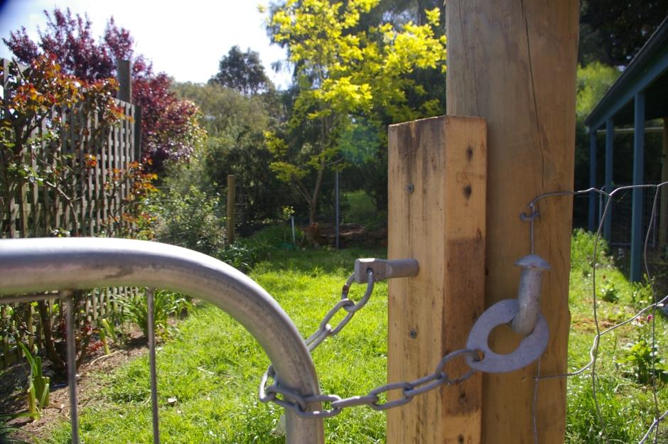 locked duck run